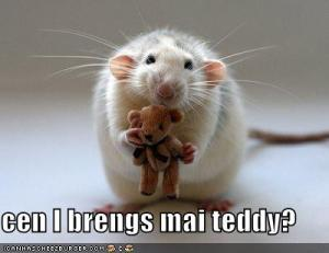 funny-pictures-mouse-asks-if-he-can-bring-his-teddy