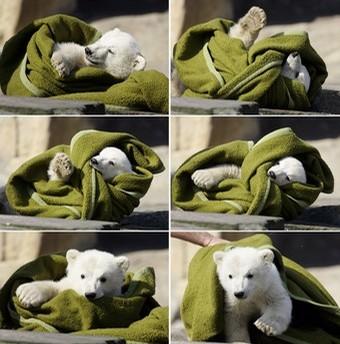 GERMANY-ANIMALS-POLAR BEAR-KNUT